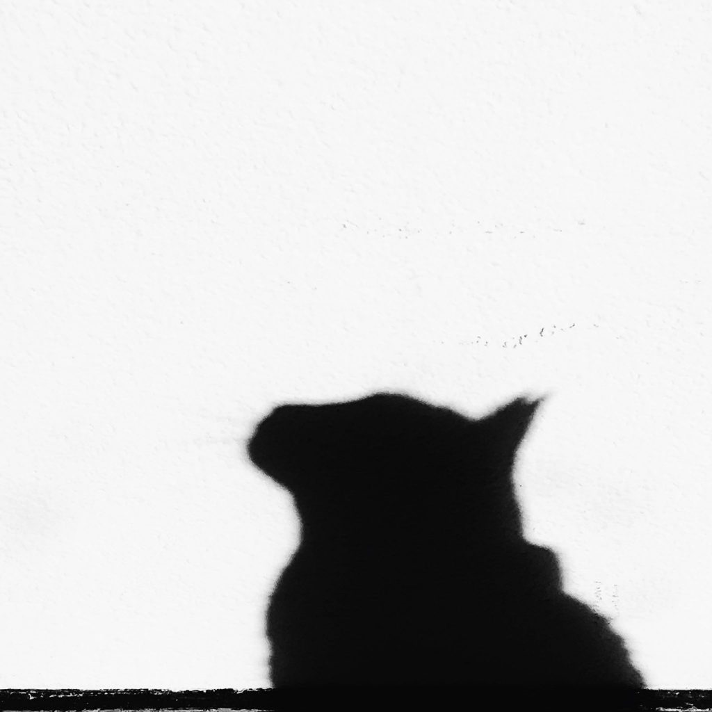 Shadow of cat on the wall in black and white